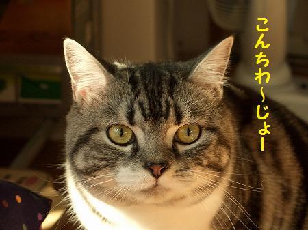 )ねこ1220(らい 149