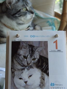 ねこ友カレンダー 004