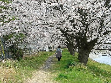 0305桜 079