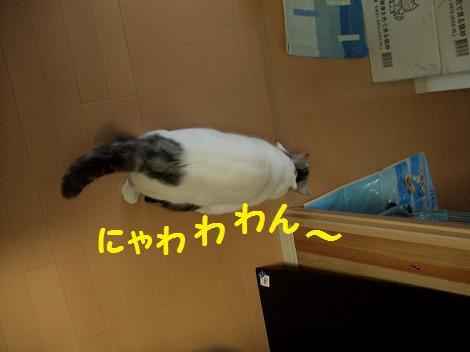 0306猫 017