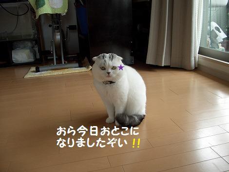 0305桜 160