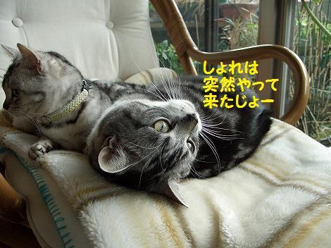 0305桜 154