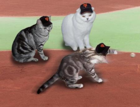 20081130075911野球猫