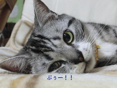 0417ねこ新カメラ 138