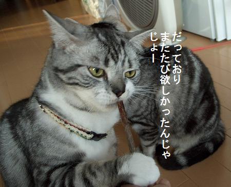 0312猫 050