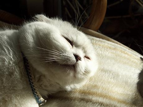 0426料理猫 012