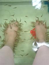 フィッシュ浴