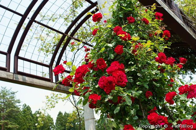 rose0908_eip.jpg