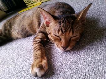 寝る猫は育つ