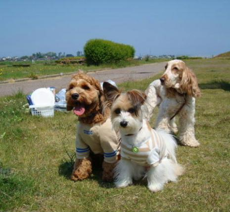 3匹の犬。