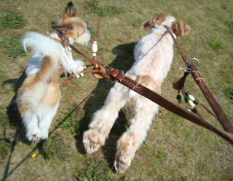 飛び出す犬たち