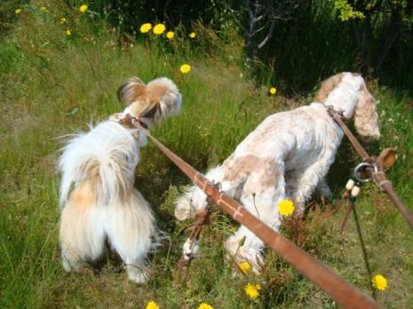 嗅ぐ犬たち