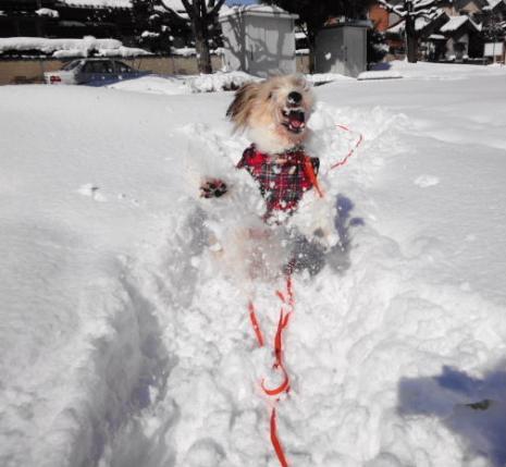 雪に挑みかかる