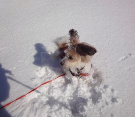 雪の中でたたずむ