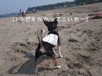 2008_05180049.jpg