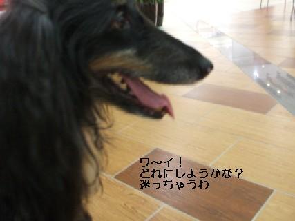 2009_03100088.jpg