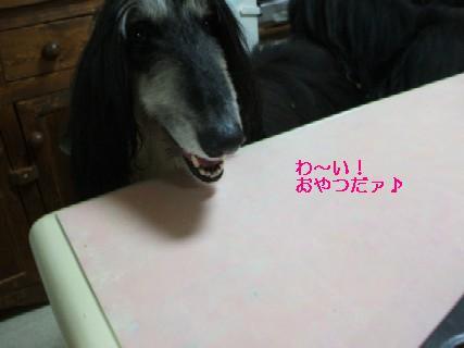 2009_03170200.jpg
