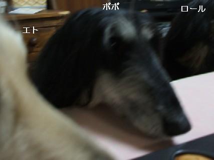 2009_03170201.jpg