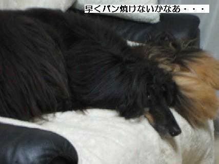 2009_03220255.jpg