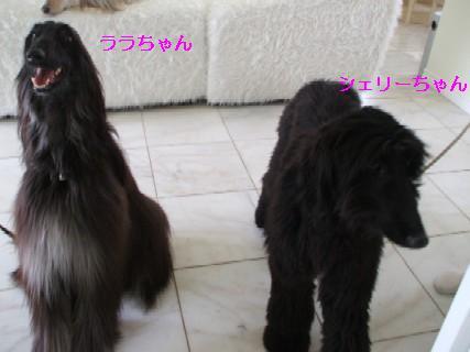 2009_03290333.jpg