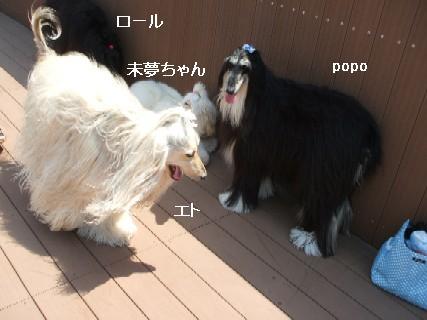 2009_05020099.jpg