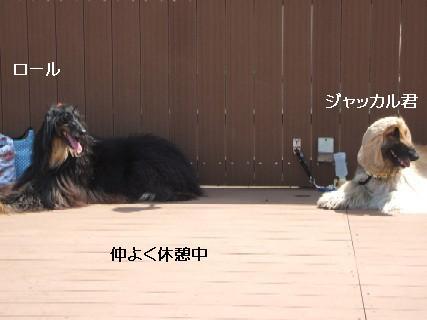 2009_05020113.jpg