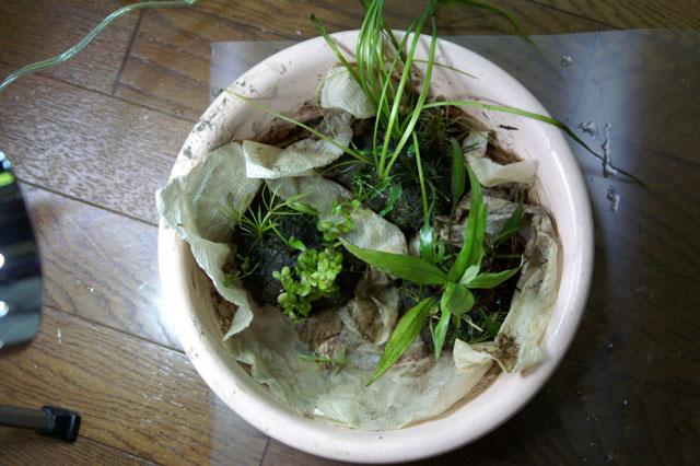 ポリ草作り6