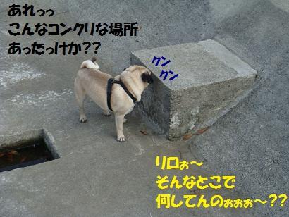 DSC04576.jpg