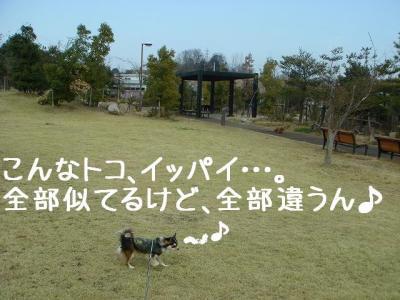 2008031209.jpg