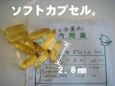 2008031608.jpg