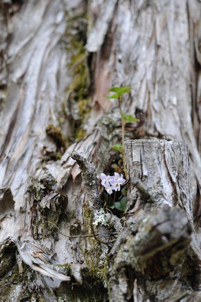うろから小さな花が