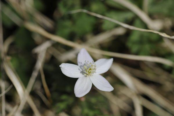 道端の小さな花