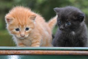 CAT+020_convert_20090806004819.jpg