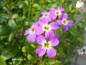 P1110919花