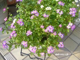 P1110923花