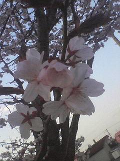 NEC_0069_20090503185950.jpg
