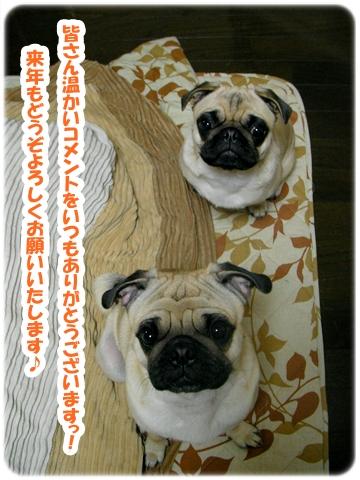 パグ画像 伝助&音美