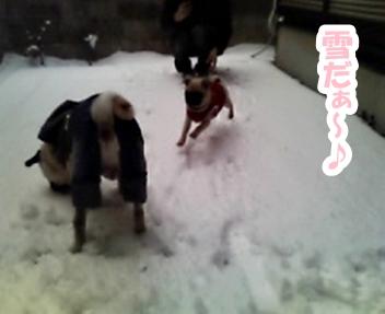パグ画像 初めての雪~