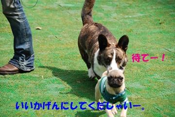 ryohuchan001s.jpg