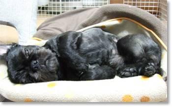 人面犬の寝顔1
