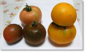 トマト3種2