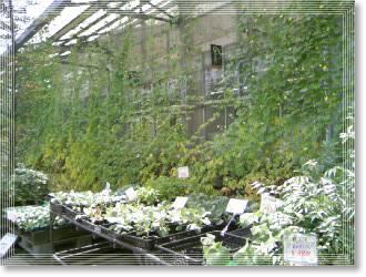 ガーデンショップ