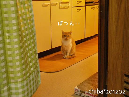chiba12-02-56.jpg
