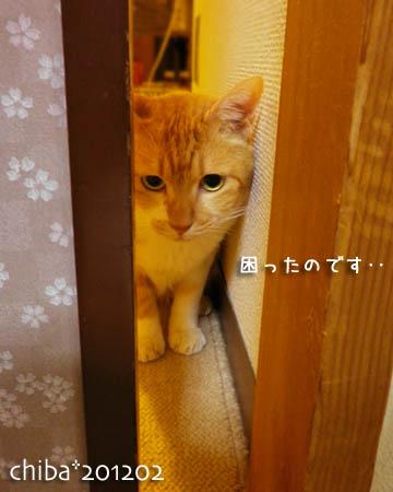 chiba12-02-84.jpg