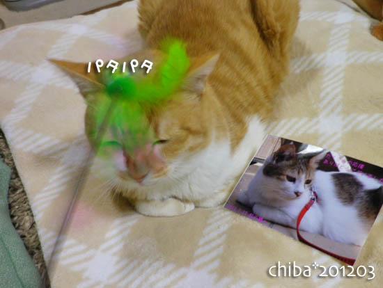 chiba12-03-106.jpg