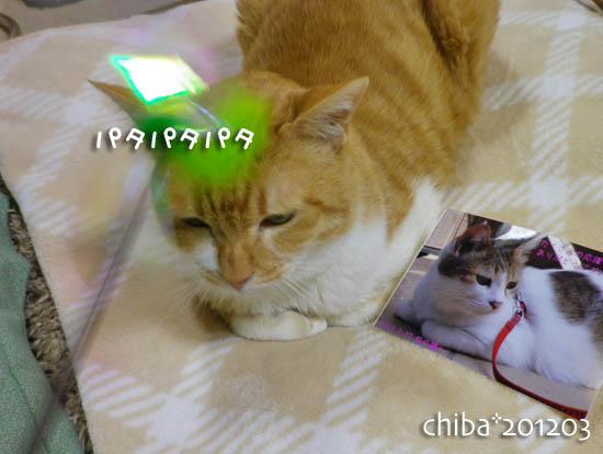 chiba12-03-108.jpg