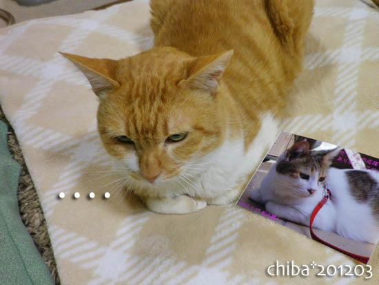 chiba12-03-109.jpg