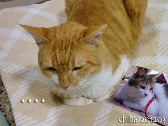 chiba12-03-111.jpg