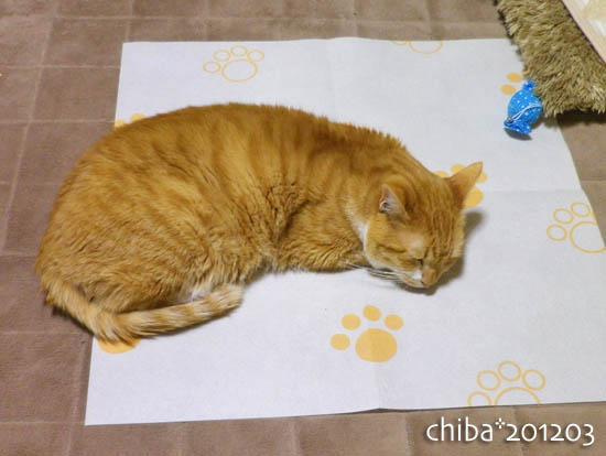 chiba12-03-125.jpg
