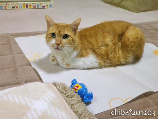 chiba12-03-130.jpg